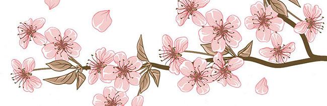 桜_イラストデータ